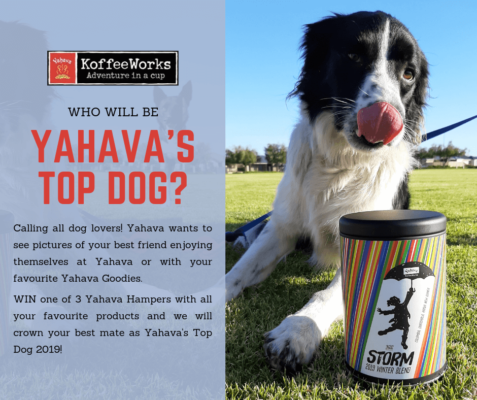 promotional poster for Yahava's Top Dog event with a dog drooling over a container of Yahava coffee