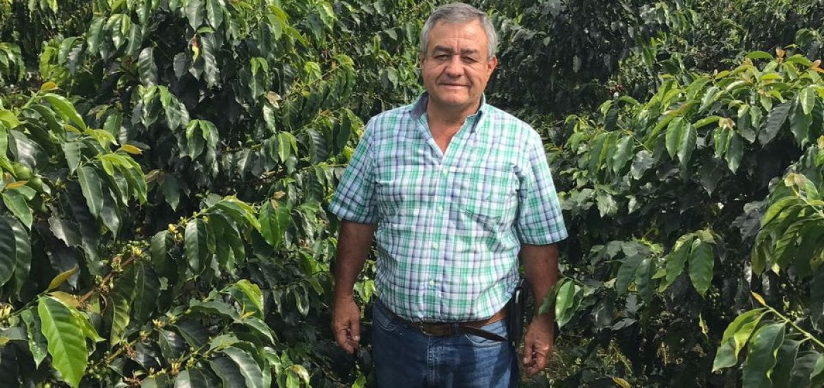 Man amongst the farming of coffee beans.