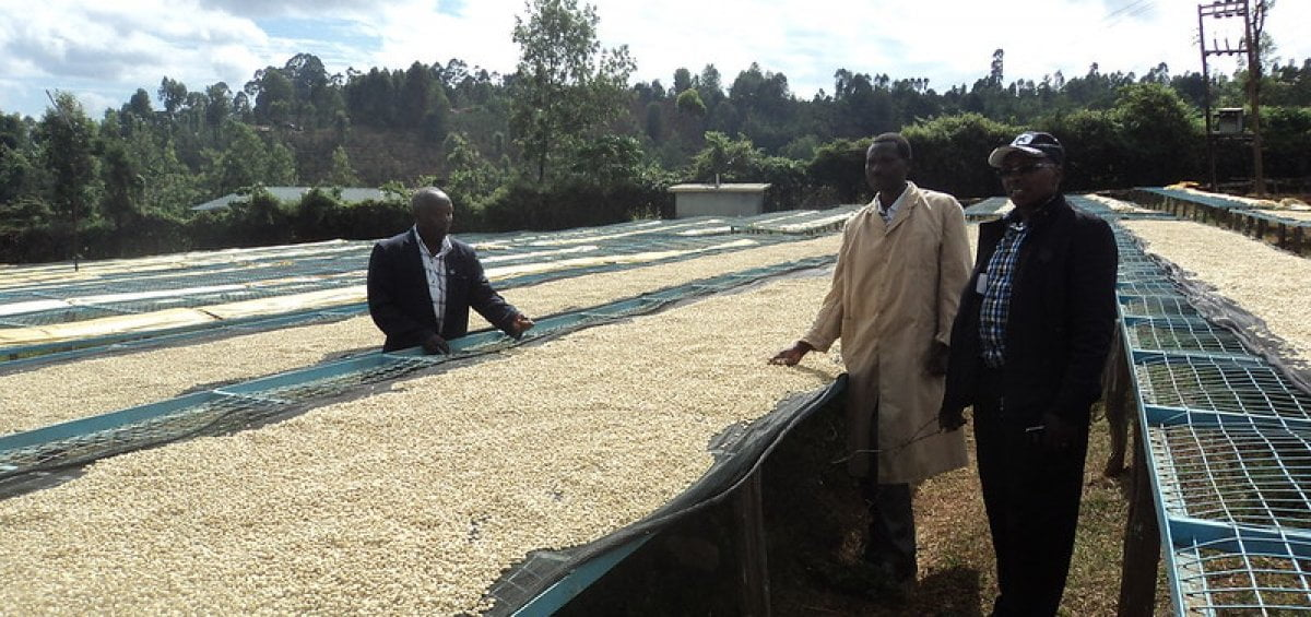 Farmers in Kenya who provide Yahava with their delicious coffee beans.